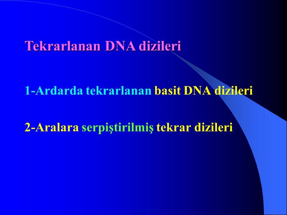 1-Ardarda tekrarlanan basit DNA dizileri 2-Aralara serpiştirilmiş tekrar dizileri Tekrarlanan DNA dizileri
