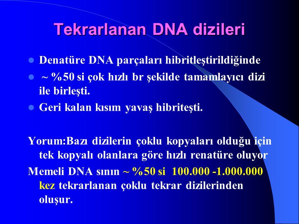Denatüre DNA parçaları hibritleştirildiğinde ~ %50 si çok hızlı br şekilde tamamlayıcı dizi ile birleşti. Geri kalan kısım yavaş hibriteşti. Yorum:Baz
