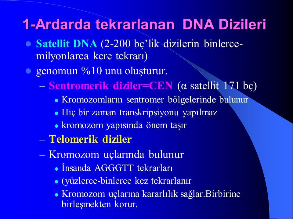 1-Ardarda tekrarlanan DNA Dizileri Satellit DNA (2-200 bç'lik dizilerin binlerce- milyonlarca kere tekrarı) genomun %10 unu oluşturur. – Sentromerik d