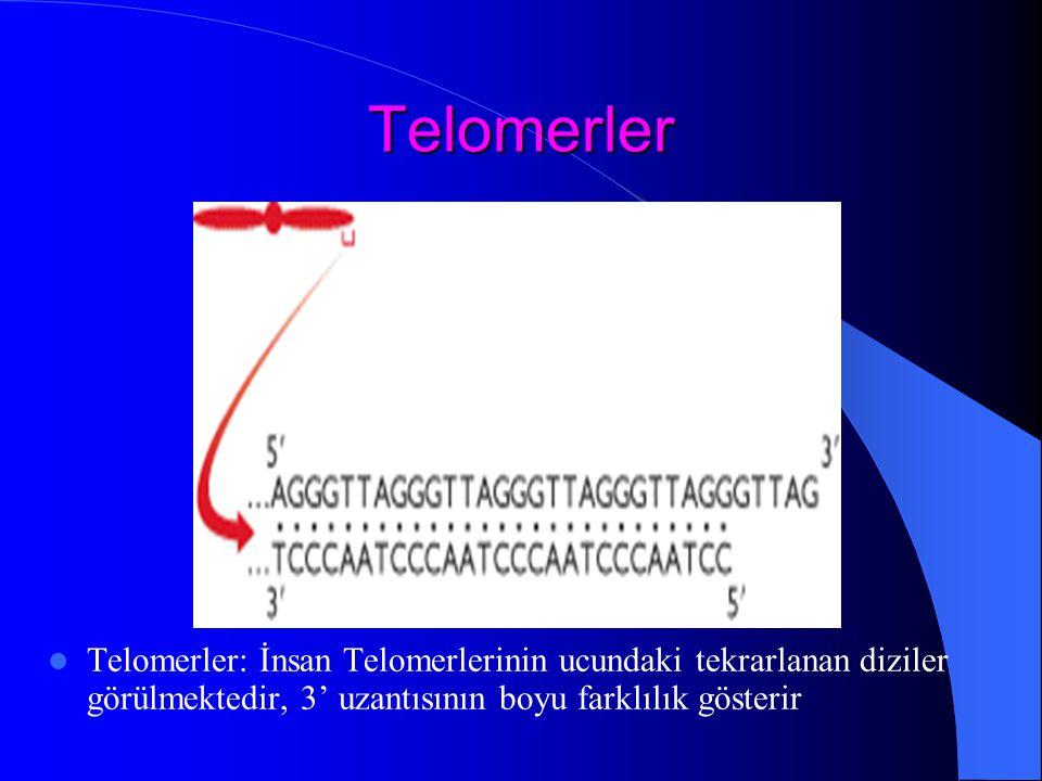 Telomerler Telomerler: İnsan Telomerlerinin ucundaki tekrarlanan diziler görülmektedir, 3' uzantısının boyu farklılık gösterir