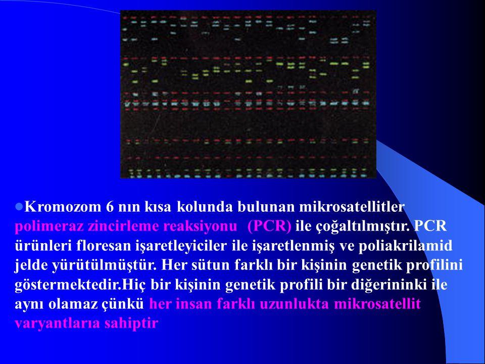 Kromozom 6 nın kısa kolunda bulunan mikrosatellitler polimeraz zincirleme reaksiyonu (PCR) ile çoğaltılmıştır. PCR ürünleri floresan işaretleyiciler i
