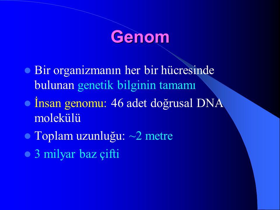 Genom Bir organizmanın her bir hücresinde bulunan genetik bilginin tamamı İnsan genomu: 46 adet doğrusal DNA molekülü Toplam uzunluğu: ~2 metre 3 mily
