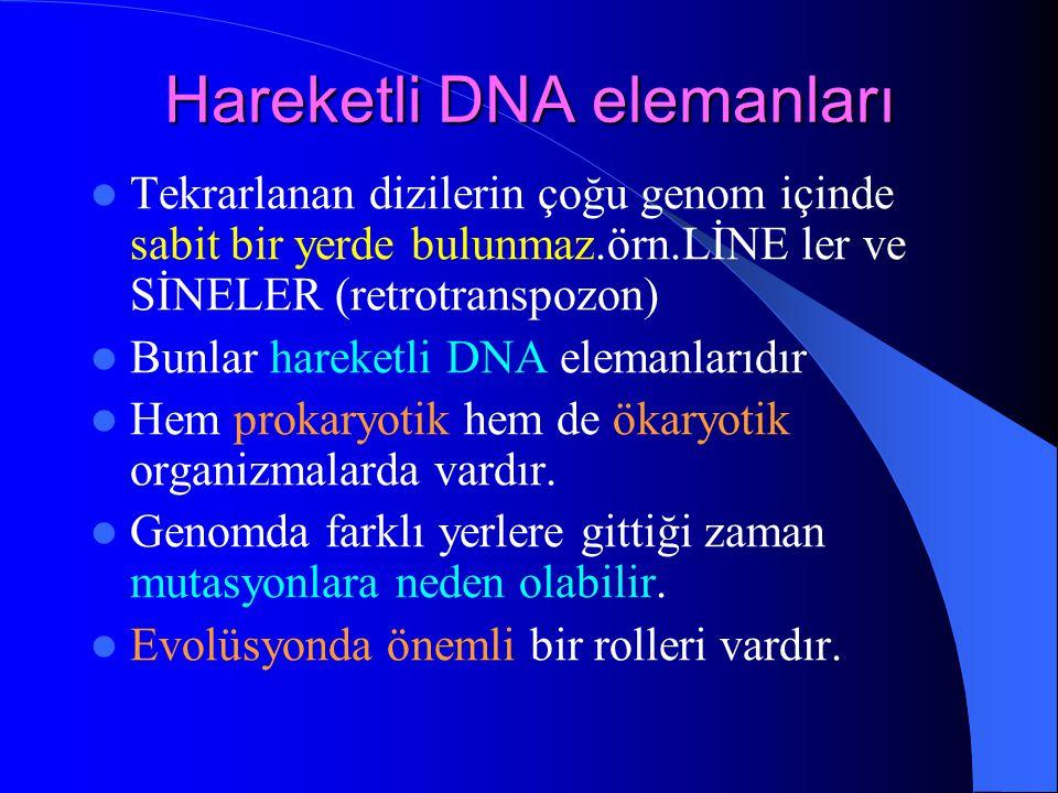 Hareketli DNA elemanları Tekrarlanan dizilerin çoğu genom içinde sabit bir yerde bulunmaz.örn.LİNE ler ve SİNELER (retrotranspozon) Bunlar hareketli D