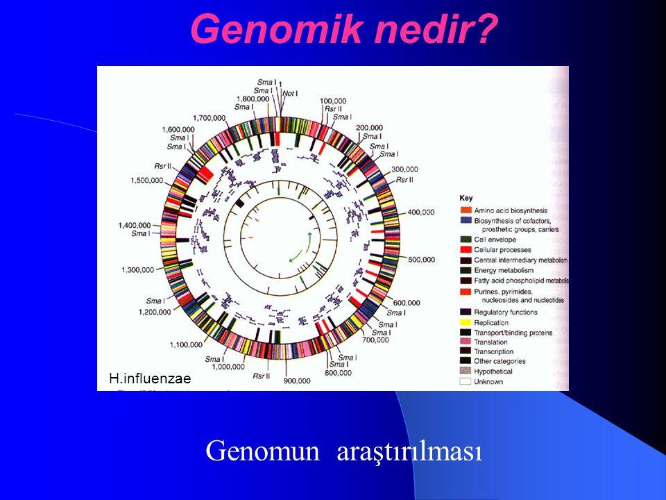 Genomun araştırılması Genomik nedir? H.influenzae