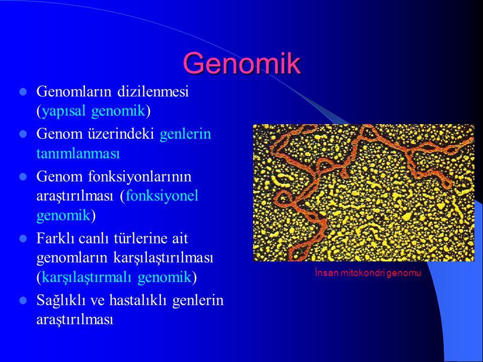 Genomik Genomların dizilenmesi (yapısal genomik) Genom üzerindeki genlerin tanımlanması Genom fonksiyonlarının araştırılması (fonksiyonel genomik) Far