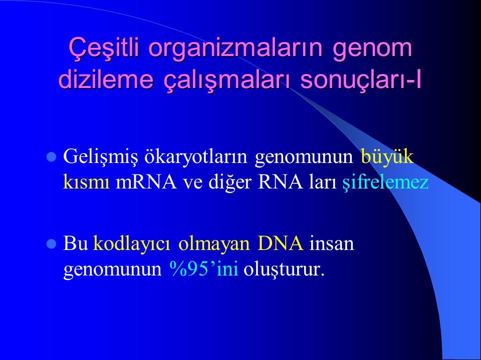 Çeşitli organizmaların genom dizileme çalışmaları sonuçları-I Gelişmiş ökaryotların genomunun büyük kısmı mRNA ve diğer RNA ları şifrelemez Bu kodlayı