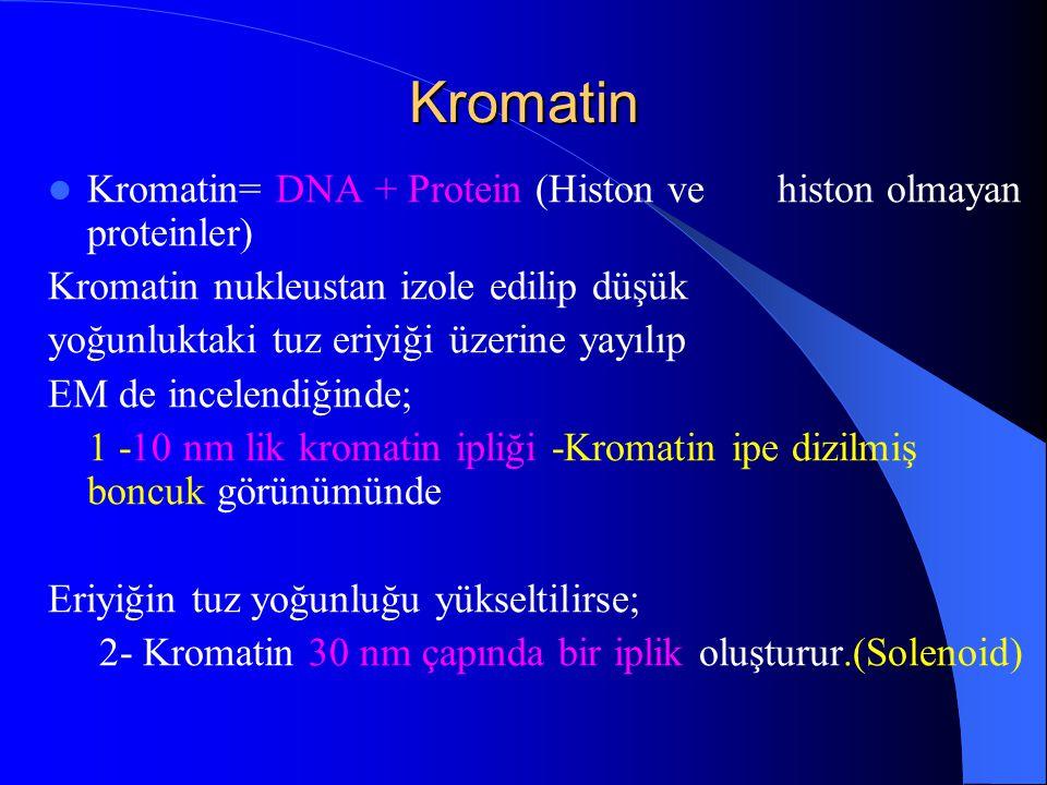 Kromatin Kromatin= DNA + Protein (Histon ve histon olmayan proteinler) Kromatin nukleustan izole edilip düşük yoğunluktaki tuz eriyiği üzerine yayılıp