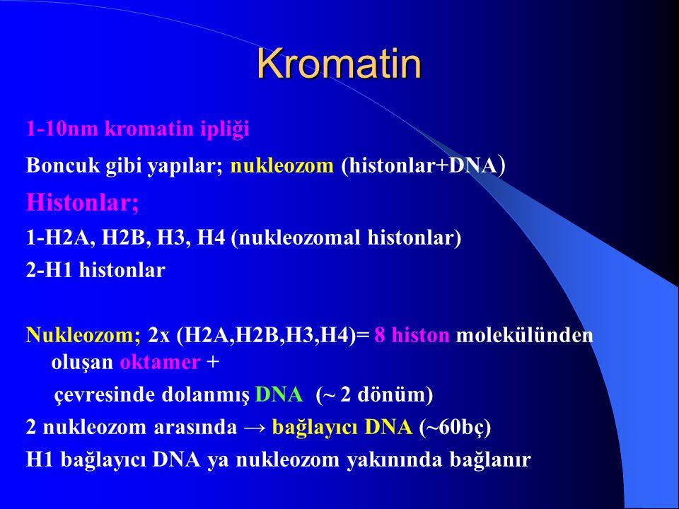 Kromatin 1-10nm kromatin ipliği Boncuk gibi yapılar; nukleozom (histonlar+DNA ) Histonlar; 1-H2A, H2B, H3, H4 (nukleozomal histonlar) 2-H1 histonlar N
