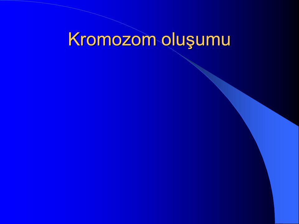Kromozom oluşumu