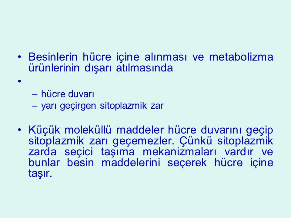 Besinlerin hücre içine alınması ve metabolizma ürünlerinin dışarı atılmasında –hücre duvarı –yarı geçirgen sitoplazmik zar Küçük moleküllü maddeler hü