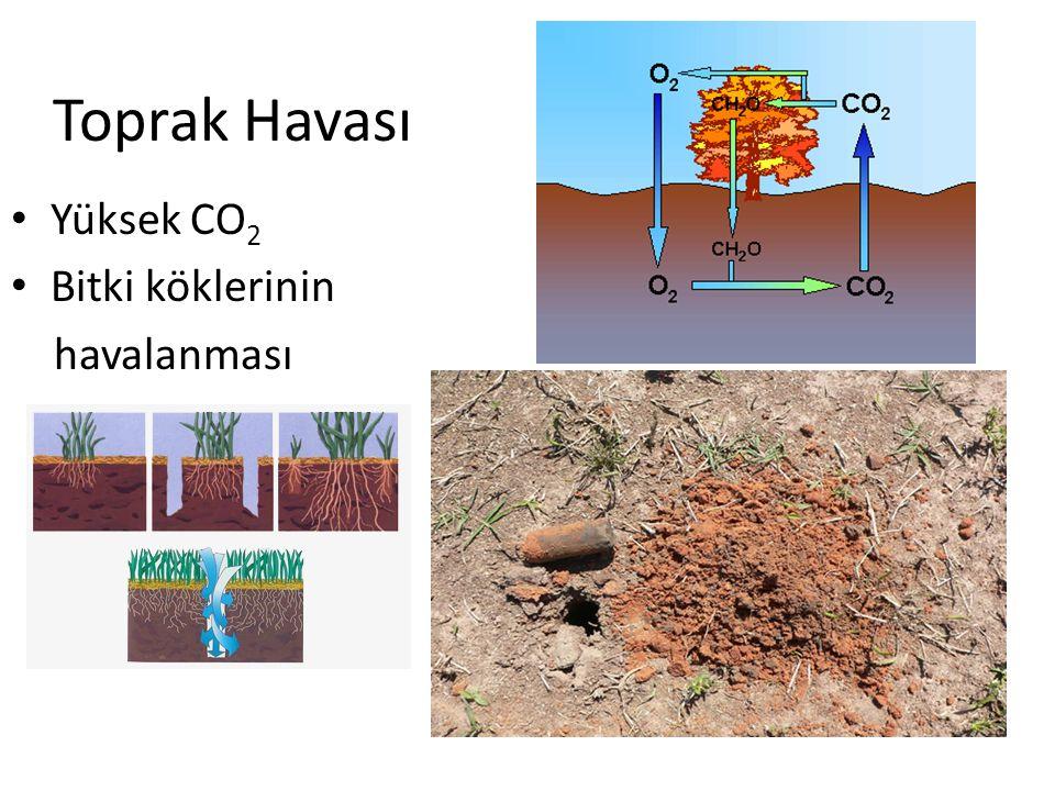 Toprak Havası Yüksek CO 2 Bitki köklerinin havalanması