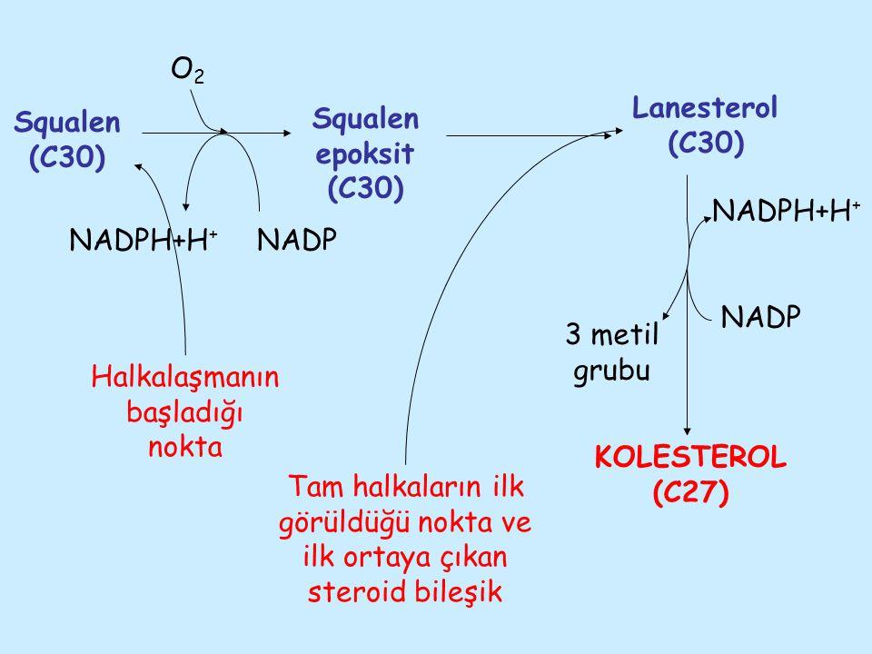 3 metil grubu NADPH+H + O2O2 Squalen (C30) Squalen epoksit (C30) Lanesterol (C30) KOLESTEROL (C27) NADP NADPH+H + NADP Halkalaşmanın başladığı nokta T