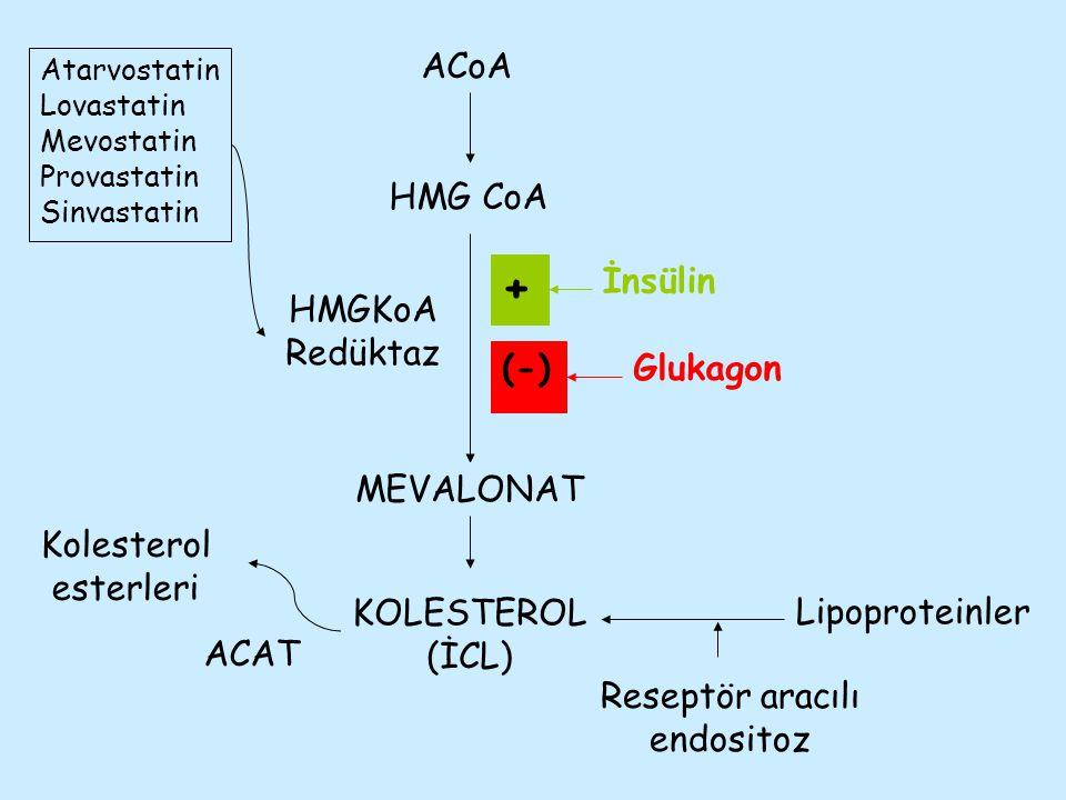 HMG CoA ACoA MEVALONAT KOLESTEROL (İCL) Lipoproteinler Reseptör aracılı endositoz Kolesterol esterleri ACAT HMGKoA Redüktaz Atarvostatin Lovastatin Me