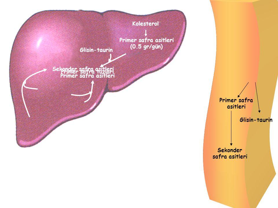 Kolesterol Primer safra asitleri (0.5 gr/gün) Primer safra tuzları Glisin-taurin Primer safra asitleri Glisin-taurin Sekonder safra asitleri Primer sa