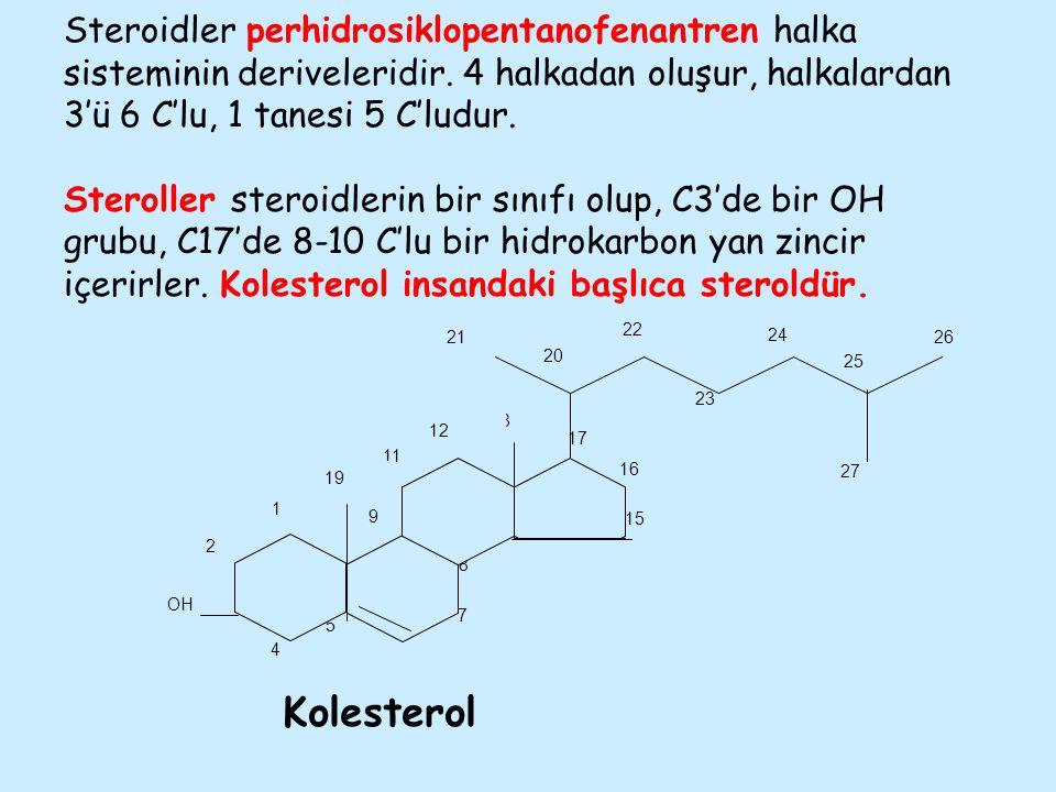 Steroidler perhidrosiklopentanofenantren halka sisteminin deriveleridir. 4 halkadan oluşur, halkalardan 3'ü 6 C'lu, 1 tanesi 5 C'ludur. Steroller ster