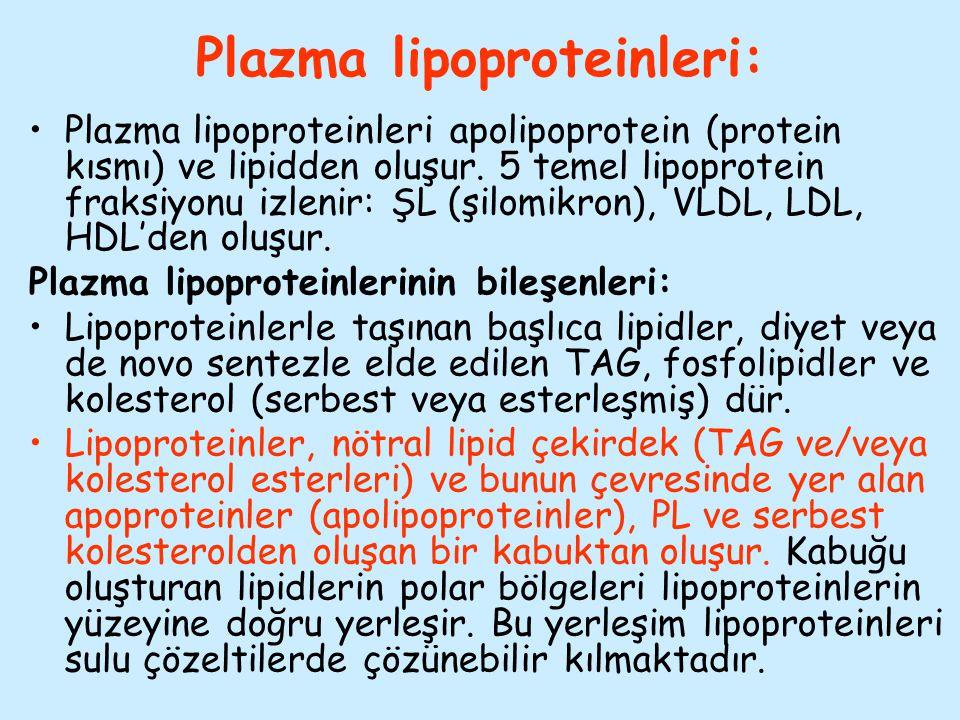 Plazma lipoproteinleri: Plazma lipoproteinleri apolipoprotein (protein kısmı) ve lipidden oluşur. 5 temel lipoprotein fraksiyonu izlenir: ŞL (şilomikr