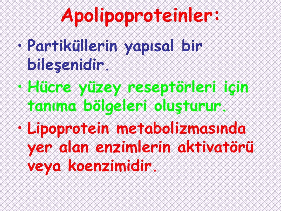 Apolipoproteinler: Partiküllerin yapısal bir bileşenidir. Hücre yüzey reseptörleri için tanıma bölgeleri oluşturur. Lipoprotein metabolizmasında yer a