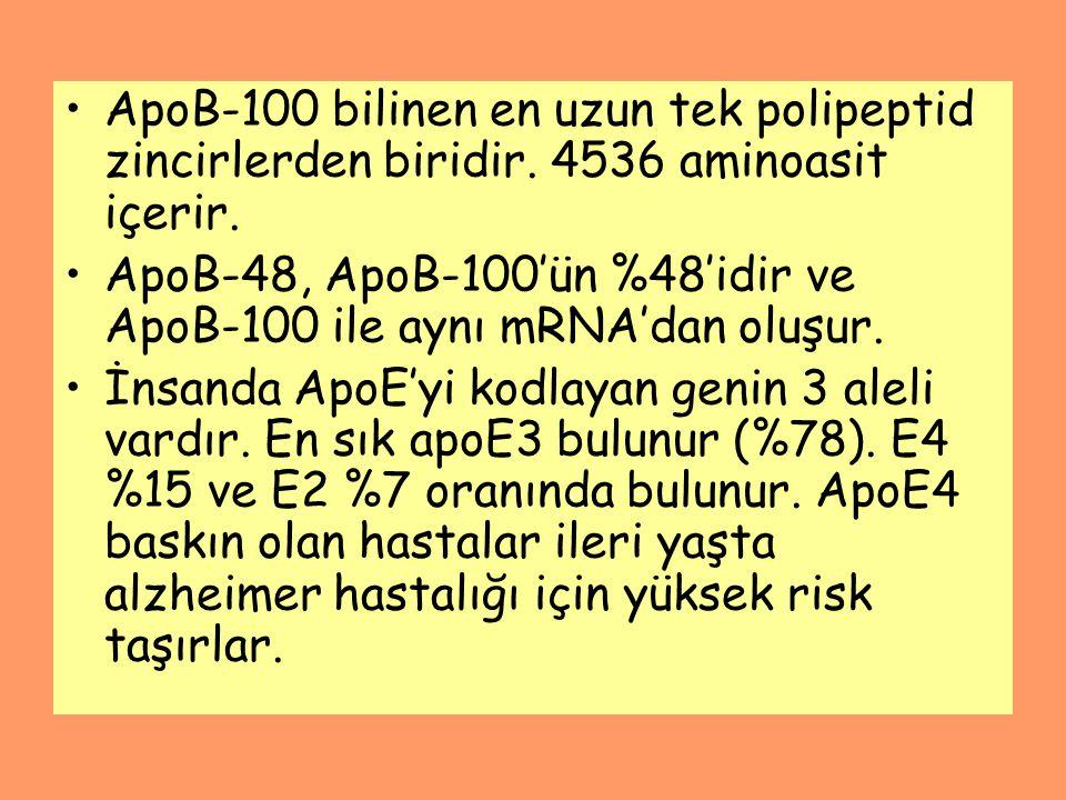 ApoB-100 bilinen en uzun tek polipeptid zincirlerden biridir. 4536 aminoasit içerir. ApoB-48, ApoB-100'ün %48'idir ve ApoB-100 ile aynı mRNA'dan oluşu