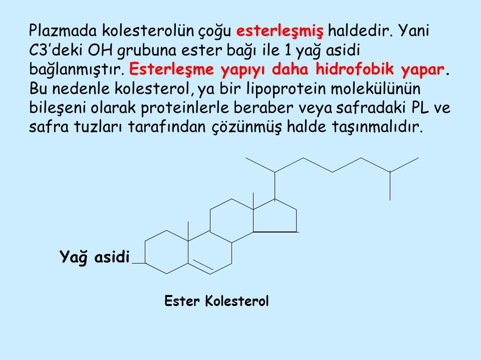 Plazmada kolesterolün çoğu esterleşmiş haldedir. Yani C3'deki OH grubuna ester bağı ile 1 yağ asidi bağlanmıştır. Esterleşme yapıyı daha hidrofobik ya