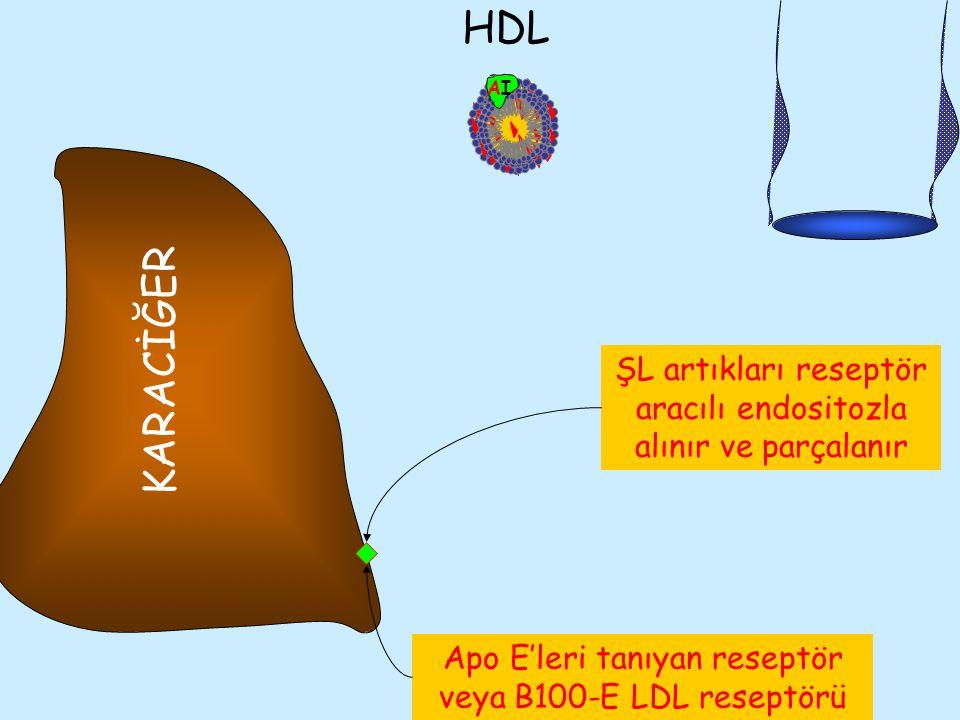 AIAI B48 CII E HDL Apo E'leri tanıyan reseptör veya B100-E LDL reseptörü KARACİĞER ŞL artıkları reseptör aracılı endositozla alınır ve parçalanır