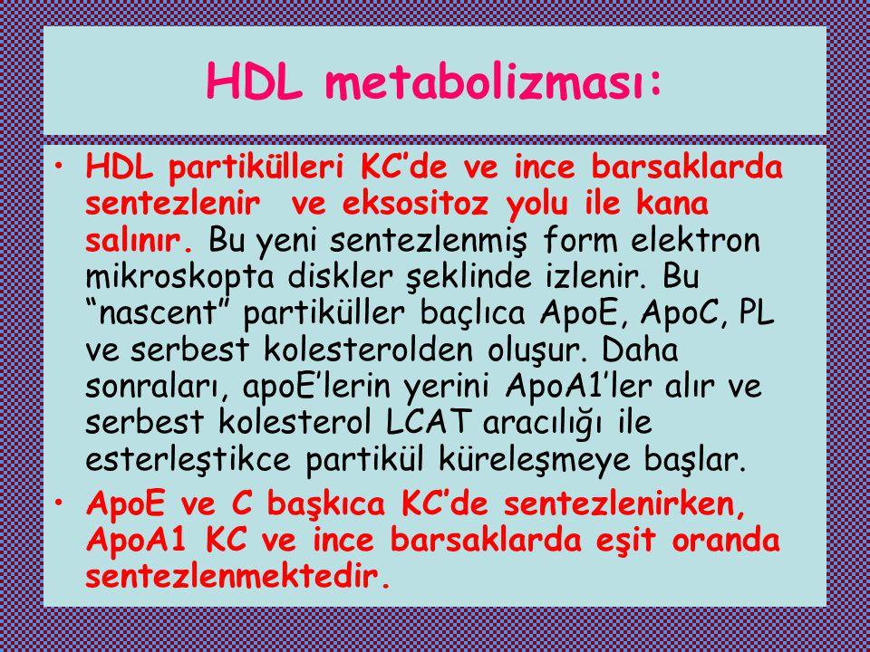 HDL metabolizması: HDL partikülleri KC'de ve ince barsaklarda sentezlenir ve eksositoz yolu ile kana salınır. Bu yeni sentezlenmiş form elektron mikro
