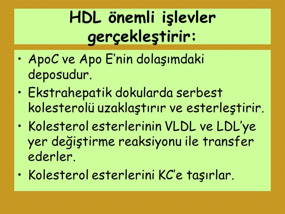 HDL önemli işlevler gerçekleştirir: ApoC ve Apo E'nin dolaşımdaki deposudur. Ekstrahepatik dokularda serbest kolesterolü uzaklaştırır ve esterleştirir
