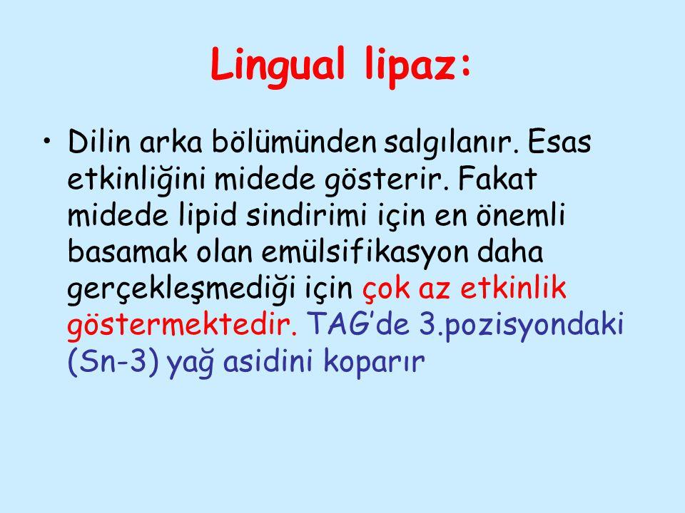Lingual lipaz: Dilin arka bölümünden salgılanır. Esas etkinliğini midede gösterir. Fakat midede lipid sindirimi için en önemli basamak olan emülsifika