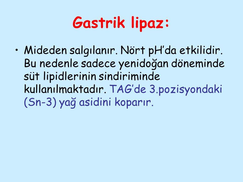 Gastrik lipaz: Mideden salgılanır. Nört pH'da etkilidir. Bu nedenle sadece yenidoğan döneminde süt lipidlerinin sindiriminde kullanılmaktadır. TAG'de