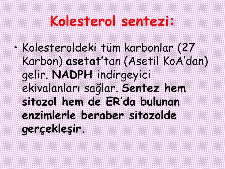 Kolesterol sentezi: Kolesteroldeki tüm karbonlar (27 Karbon) asetat'tan (Asetil KoA'dan) gelir. NADPH indirgeyici ekivalanları sağlar. Sentez hem sito