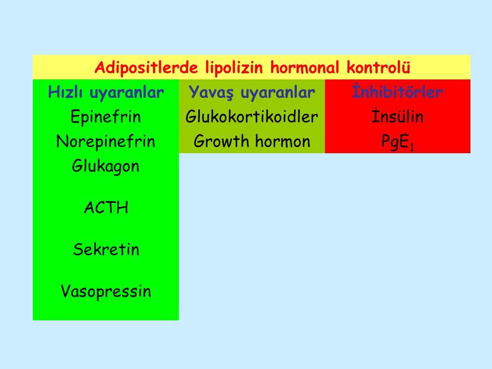 Adipositlerde lipolizin hormonal kontrolü Hızlı uyaranlarYavaş uyaranlarİnhibitörler EpinefrinGlukokortikoidlerİnsülin NorepinefrinGrowth hormonPgE 1