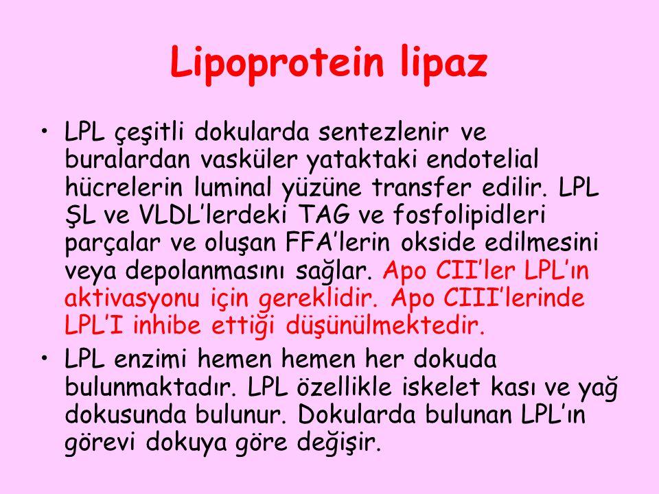 Lipoprotein lipaz LPL çeşitli dokularda sentezlenir ve buralardan vasküler yataktaki endotelial hücrelerin luminal yüzüne transfer edilir. LPL ŞL ve V