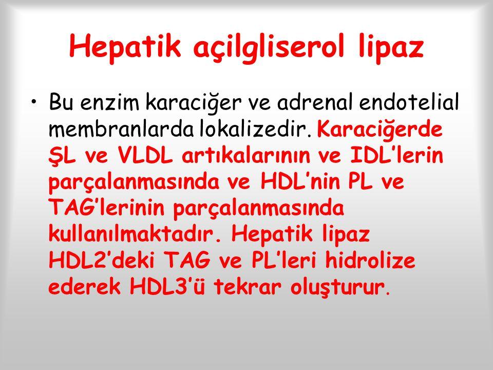 Hepatik açilgliserol lipaz Bu enzim karaciğer ve adrenal endotelial membranlarda lokalizedir. Karaciğerde ŞL ve VLDL artıkalarının ve IDL'lerin parçal