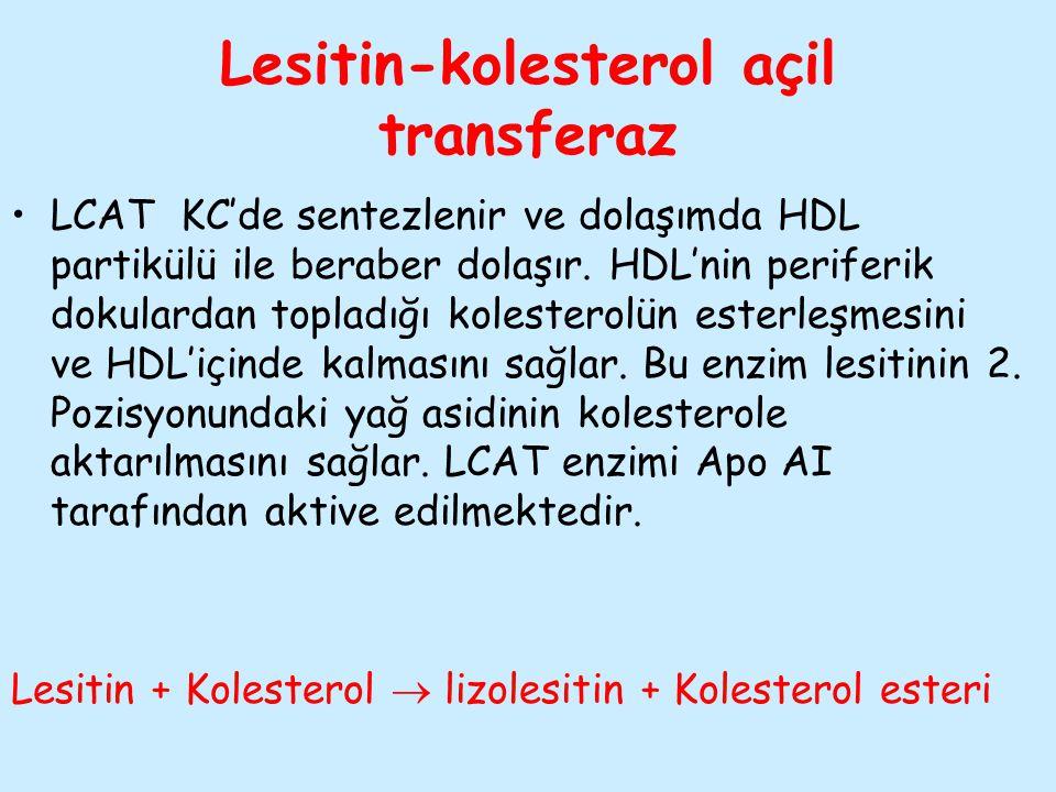 Lesitin-kolesterol açil transferaz LCAT KC'de sentezlenir ve dolaşımda HDL partikülü ile beraber dolaşır. HDL'nin periferik dokulardan topladığı koles