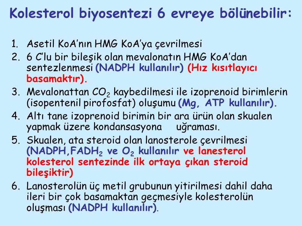 Kolesterol biyosentezi 6 evreye bölünebilir: 1.Asetil KoA'nın HMG KoA'ya çevrilmesi 2.6 C'lu bir bileşik olan mevalonatın HMG KoA'dan sentezlenmesi (N
