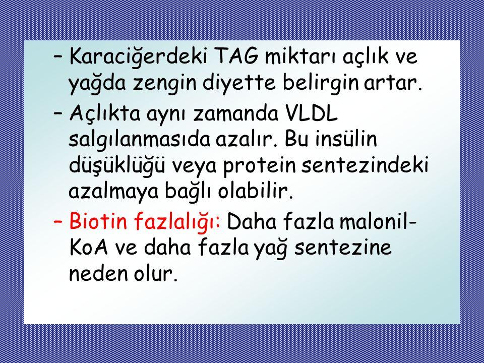 –Karaciğerdeki TAG miktarı açlık ve yağda zengin diyette belirgin artar. –Açlıkta aynı zamanda VLDL salgılanmasıda azalır. Bu insülin düşüklüğü veya p