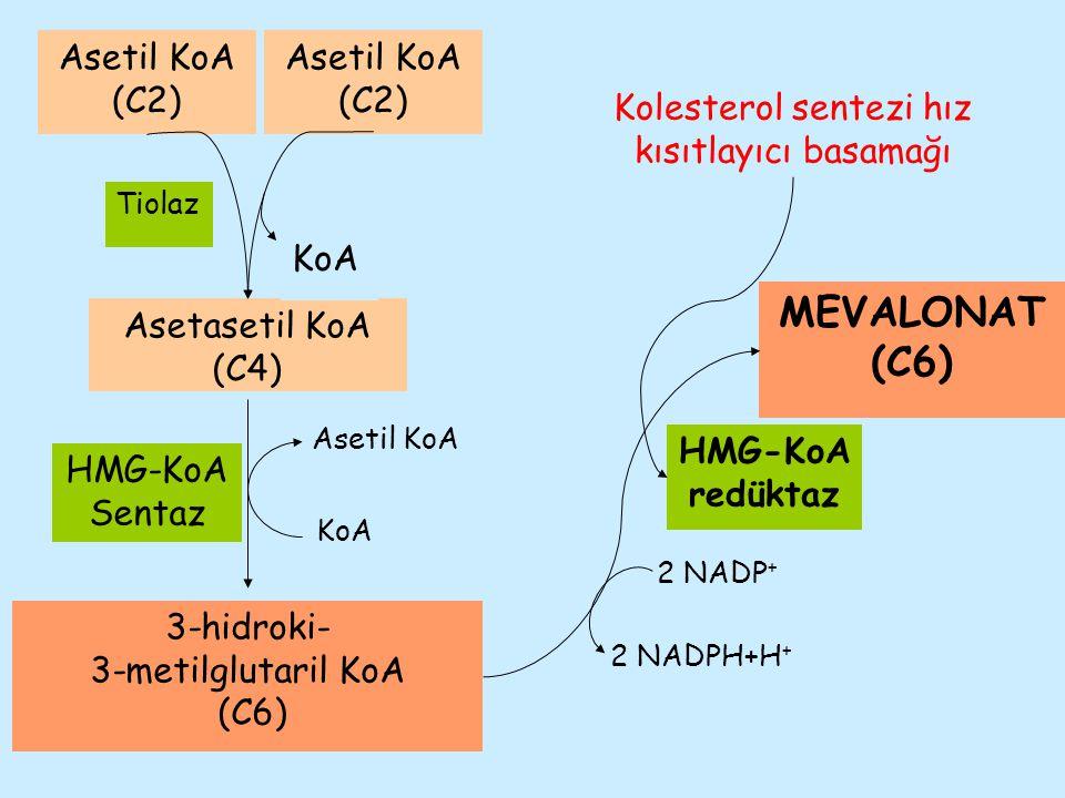 Asetil KoA Asetasetil KoA (C4) KoA Tiolaz Asetil KoA (C2) Asetil KoA (C2) KoA 3-hidroki- 3-metilglutaril KoA (C6) HMG-KoA Sentaz HMG-KoA redüktaz MEVA