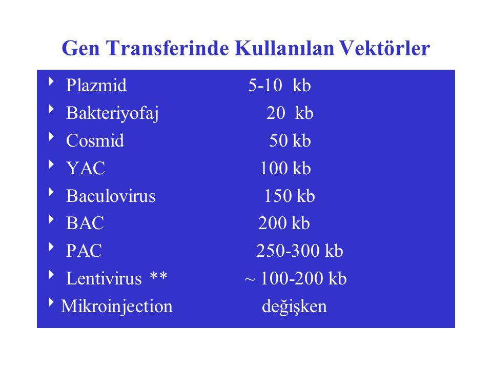 Gen Transferinde Kullanılan Vektörler  Plazmid 5-10 kb  Bakteriyofaj 20 kb  Cosmid 50 kb  YAC 100 kb  Baculovirus 150 kb  BAC 200 kb  PAC 250-3