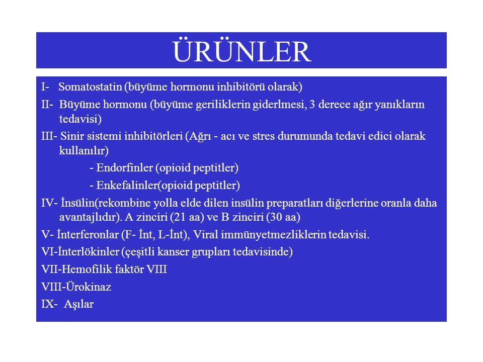 ÜRÜNLER I- Somatostatin (büyüme hormonu inhibitörü olarak) II- Büyüme hormonu (büyüme geriliklerin giderlmesi, 3 derece ağır yanıkların tedavisi) III-