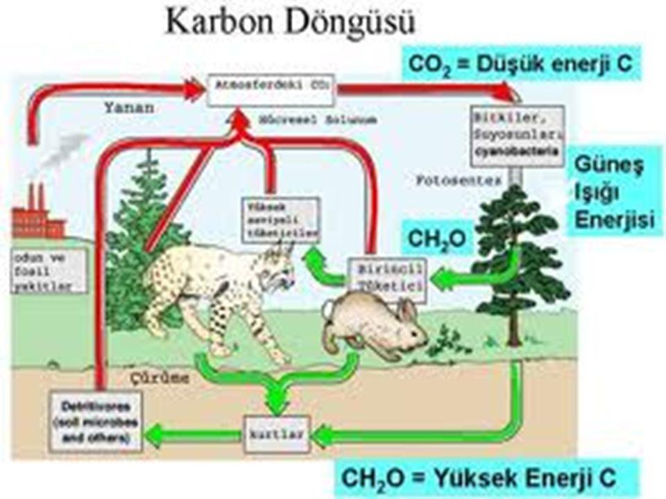 Doğadaki karbonun çoğu karbondioksit şeklindedir.