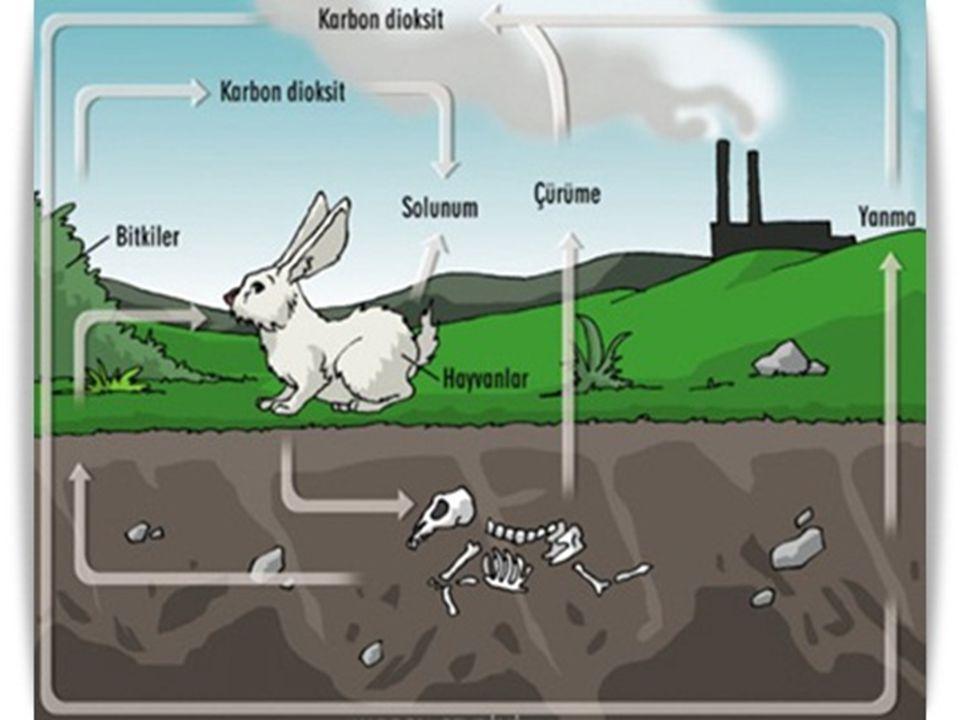 AZOT DÖNGÜSÜ  Azotun doğada en bol olarak bulunduğu yerler;  1.Atmosfer, 2.Canlıların yapısı (Canlı vücudunda Proteinlerin, Nükleik asitlerin, çeşitli hormonların ve vitaminlerin yapısında bulunur.) Azotun asıl kaynağı atmosferdir.