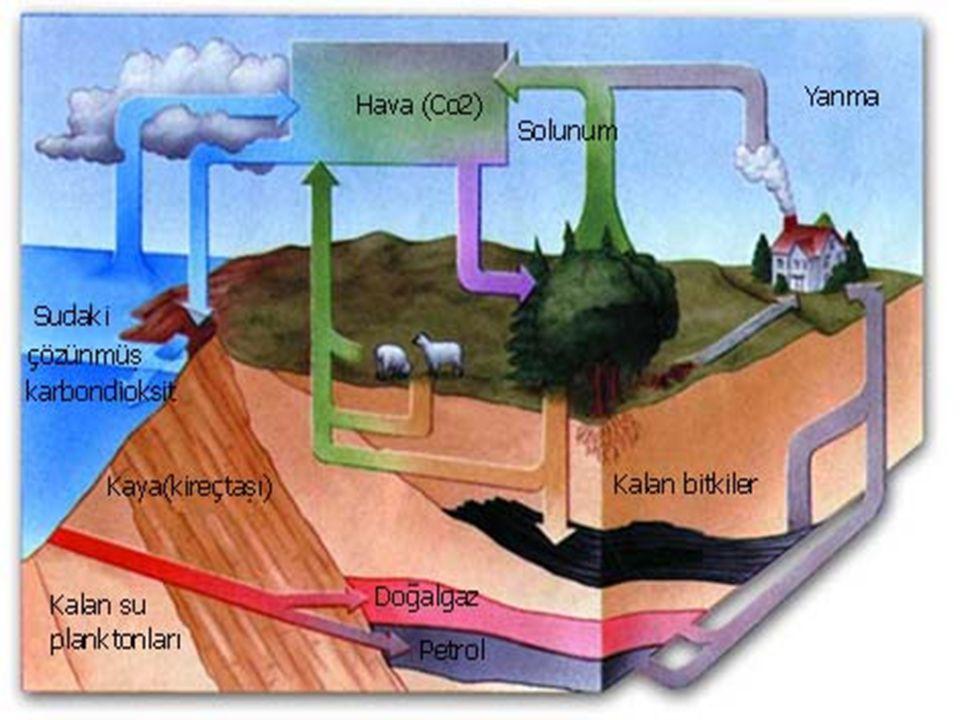 Oksijenin kaynakları:  1-Atmosfere en önemli oksijen sağlayan kaynak yeşil bitki ve alglerin fotosentez sonucunda kullandığı CO2 yerine oksijen vererek oksijen döngüsü gerçekleştirmelerdir.