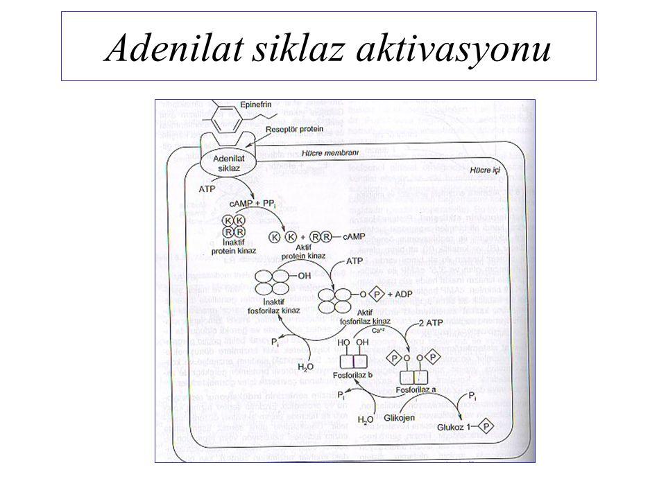 Adenilat siklaz aktivasyonu