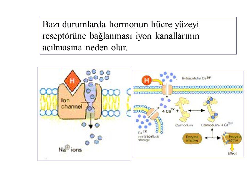 Bazı durumlarda hormonun hücre yüzeyi reseptörüne bağlanması iyon kanallarının açılmasına neden olur.