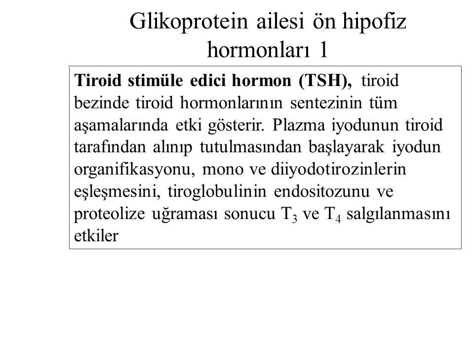 Glikoprotein ailesi ön hipofiz hormonları 1 Tiroid stimüle edici hormon (TSH), tiroid bezinde tiroid hormonlarının sentezinin tüm aşamalarında etki gö