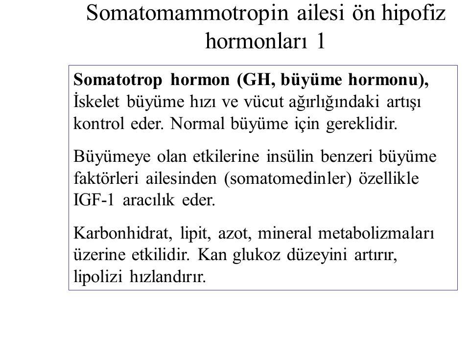 Somatomammotropin ailesi ön hipofiz hormonları 1 Somatotrop hormon (GH, büyüme hormonu), İskelet büyüme hızı ve vücut ağırlığındaki artışı kontrol ede