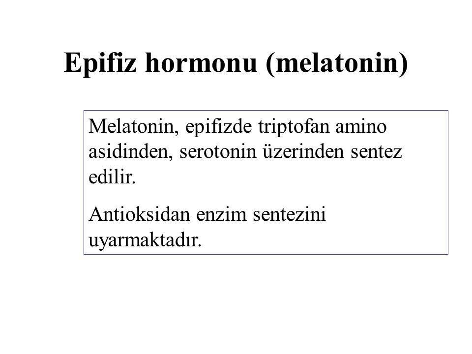 Epifiz hormonu (melatonin) Melatonin, epifizde triptofan amino asidinden, serotonin üzerinden sentez edilir. Antioksidan enzim sentezini uyarmaktadır.