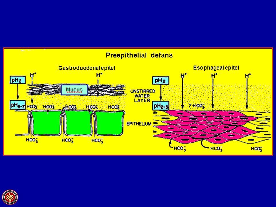 Mucus Preepithelial defans Gastroduodenal epitel Esophageal epitel