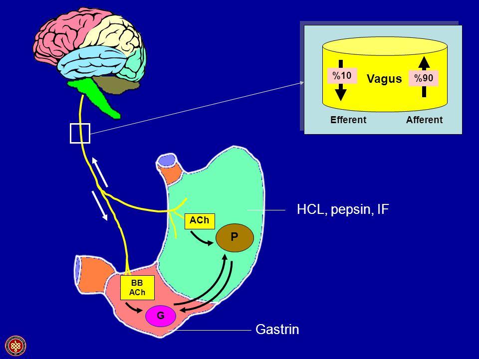 P ACh BB ACh G Gastrin HCL, pepsin, IF Vagus Efferent Afferent %10 %90