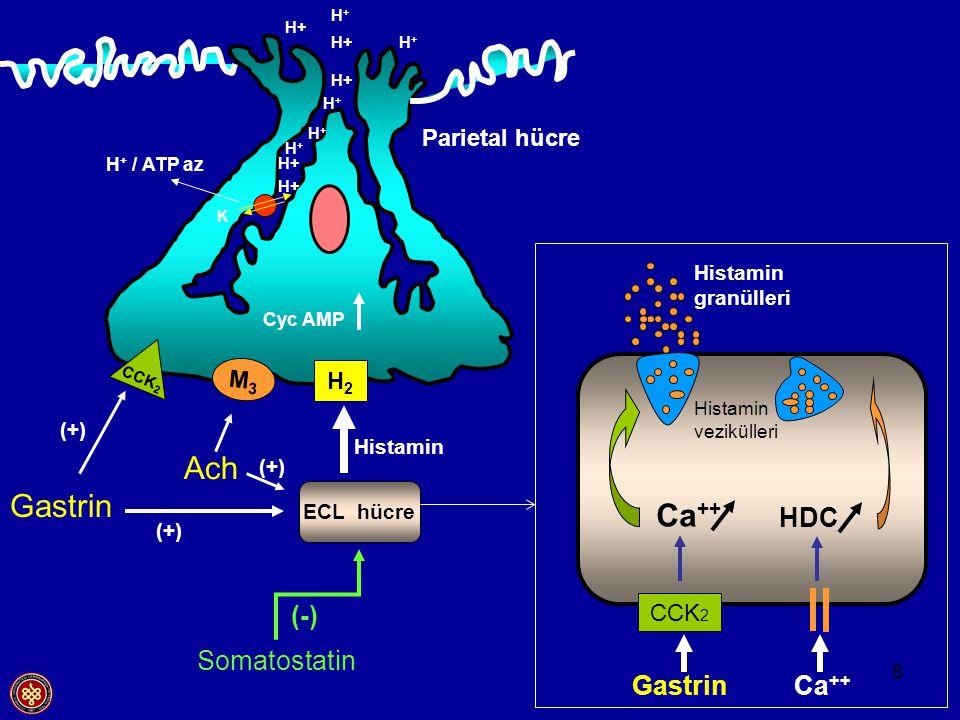 8 CCK 2 Gastrin Ca ++ Histamin vezikülleri Ca ++ HDC H2H2 ECL hücre M3M3 CCK 2 Gastrin Ach Histamin Histamin granülleri Cyc AMP Parietal hücre H + / A