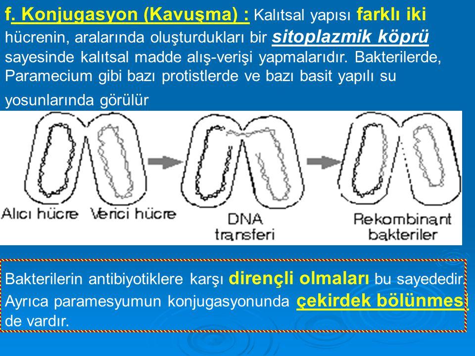 f. Konjugasyon (Kavuşma) : Kalıtsal yapısı farklı iki hücrenin, aralarında oluşturdukları bir sitoplazmik köprü sayesinde kalıtsal madde alış-verişi y